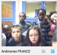 Francia_Anemones.jpg